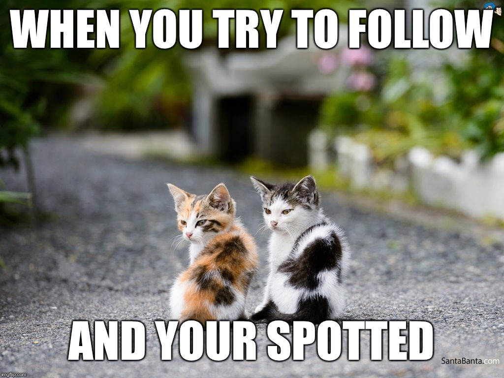 WHEN YOU TRY TO FOLLOW AND YOUR SPOTTED | image tagged in memes,hd,high definition,hd meme,cats | made w/ Imgflip meme maker