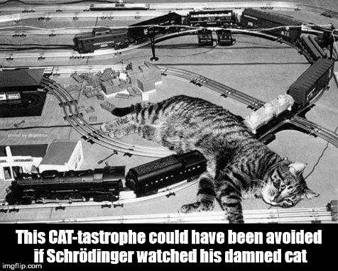 This is not what I meant when I said to think outside of the box | This CAT-tastrophe could have been avoided if Schrödinger watched his damned cat | image tagged in cat,science,reality,philosophy,schrodinger | made w/ Imgflip meme maker