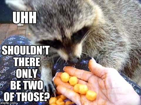 He seems interested in those. | UHH SHOULDN'T THERE ONLY BE TWO OF THOSE? | image tagged in interested racoon,racoon,balls | made w/ Imgflip meme maker