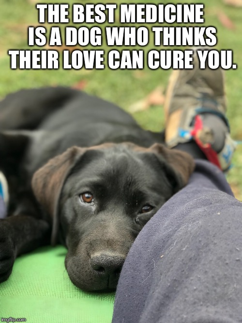 The best medicine | THE BEST MEDICINE IS A DOG WHO THINKS THEIR LOVE CAN CURE YOU. | image tagged in dogs,love,medicine | made w/ Imgflip meme maker