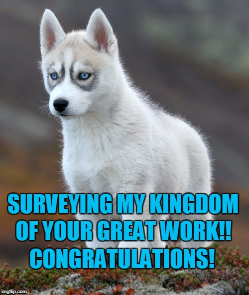 SURVEYING MY KINGDOM OF YOUR GREAT WORK!! CONGRATULATIONS! | image tagged in wolf wolves | made w/ Imgflip meme maker