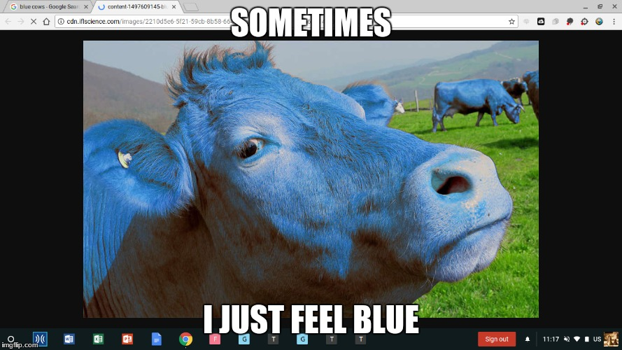 blue | SOMETIMES I JUST FEEL BLUE | image tagged in cows | made w/ Imgflip meme maker