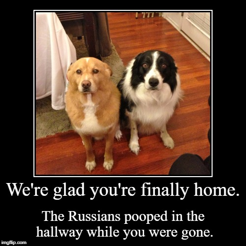 The Russians pooped in the hallway | We're glad you're finally home. | The Russians pooped in the hallway while you were gone. | image tagged in funny,the russians did it,liberal dementia | made w/ Imgflip demotivational maker