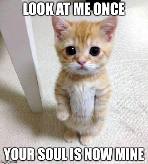 Cute Cat Meme | LOOK AT ME ONCE YOUR SOUL IS NOW MINE | image tagged in memes,cute cat | made w/ Imgflip meme maker