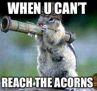Bazooka Squirrel | WHEN U CAN'T REACH THE ACORNS | image tagged in memes,bazooka squirrel | made w/ Imgflip meme maker