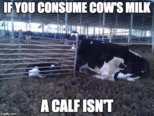 IF YOU CONSUME COW'S MILK A CALF ISN'T | image tagged in the evil dairy industry | made w/ Imgflip meme maker