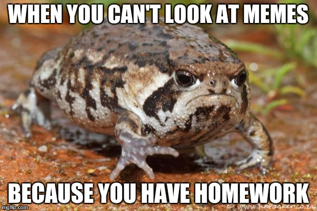 Grumpy Toad Meme | WHEN YOU CAN'T LOOK AT MEMES BECAUSE YOU HAVE HOMEWORK | image tagged in memes,grumpy toad | made w/ Imgflip meme maker