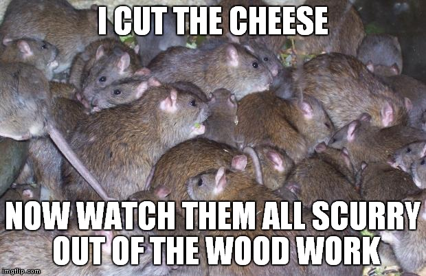 Keep an eye on he who has commented. | I CUT THE CHEESE NOW WATCH THEM ALL SCURRY OUT OF THE WOOD WORK | image tagged in rats,scurry lil alt users | made w/ Imgflip meme maker