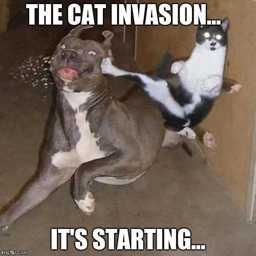 Ninja Cat | THE CAT INVASION... IT'S STARTING... | image tagged in ninja cat | made w/ Imgflip meme maker