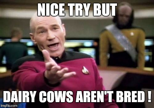 Picard Wtf Meme | NICE TRY BUT DAIRY COWS AREN'T BRED ! | image tagged in memes,picard wtf | made w/ Imgflip meme maker