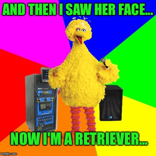 Wrong lyrics karaoke big bird | AND THEN I SAW HER FACE... NOW I'M A RETRIEVER... | image tagged in wrong lyrics karaoke big bird | made w/ Imgflip meme maker