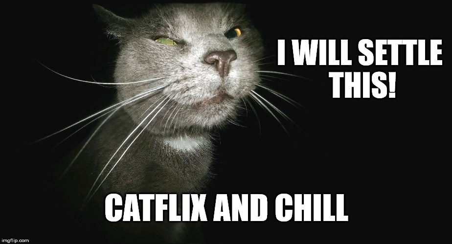 Stalker Cat | I WILL SETTLE THIS! CATFLIX AND CHILL | image tagged in stalker cat | made w/ Imgflip meme maker