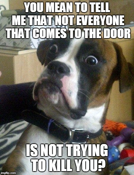 YOU MEAN TO TELL ME THAT NOT EVERYONE THAT COMES TO THE DOOR IS NOT TRYING TO KILL YOU? | image tagged in memes,dog | made w/ Imgflip meme maker
