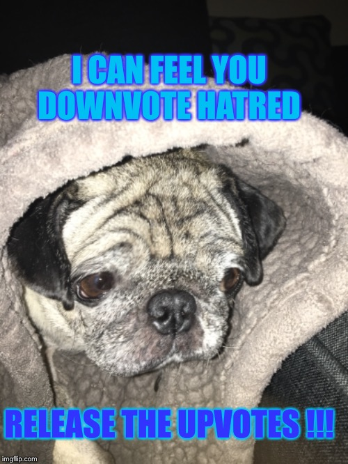 Upvote week | I CAN FEEL YOU DOWNVOTE HATRED RELEASE THE UPVOTES !!! | image tagged in upvote week,memes,drinking,pugs,star wars | made w/ Imgflip meme maker