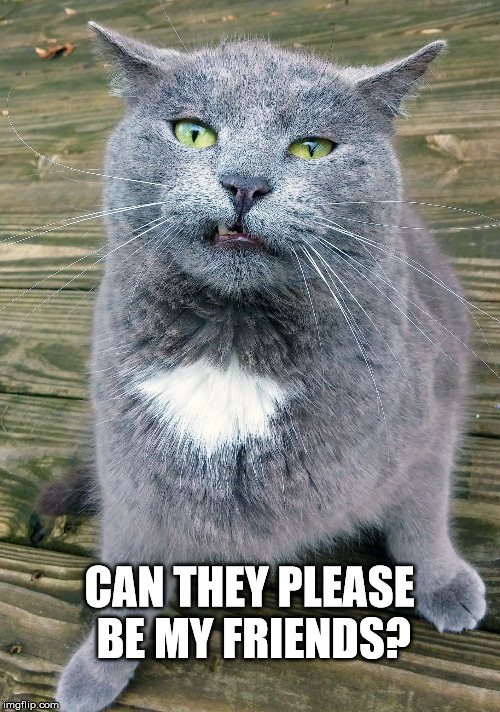 Smiley Cat | CAN THEY PLEASE BE MY FRIENDS? | image tagged in smiley cat | made w/ Imgflip meme maker