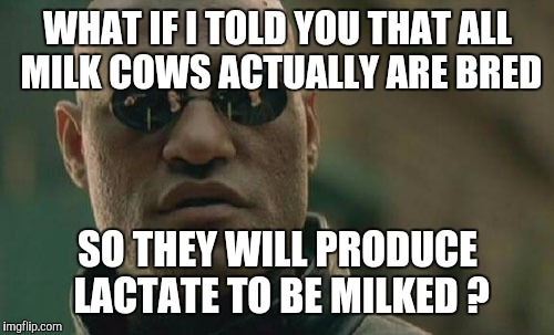 Matrix Morpheus Meme | WHAT IF I TOLD YOU THAT ALL MILK COWS ACTUALLY ARE BRED SO THEY WILL PRODUCE LACTATE TO BE MILKED ? | image tagged in memes,matrix morpheus | made w/ Imgflip meme maker