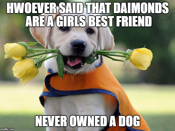 Cute dog | HWOEVER SAID THAT DAIMONDS ARE A GIRLS BEST FRIEND NEVER OWNED A DOG | image tagged in cute dog | made w/ Imgflip meme maker
