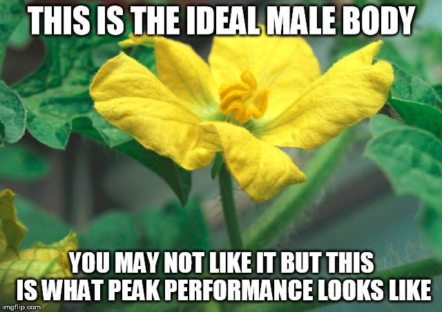 Ideal Male Body | THIS IS THE IDEAL MALE BODY YOU MAY NOT LIKE IT BUT THIS IS WHAT PEAK PERFORMANCE LOOKS LIKE | image tagged in ideal male body,peak performance | made w/ Imgflip meme maker