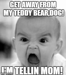 Angry Baby Meme | GET AWAY FROM MY TEDDY BEAR,DOG! I'M TELLIN MOM! | image tagged in memes,angry baby | made w/ Imgflip meme maker