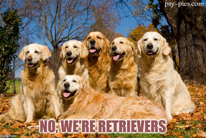 NO, WE'RE RETRIEVERS | made w/ Imgflip meme maker