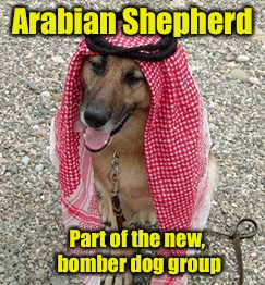 Arabian Shepherd Part of the new, bomber dog group | made w/ Imgflip meme maker