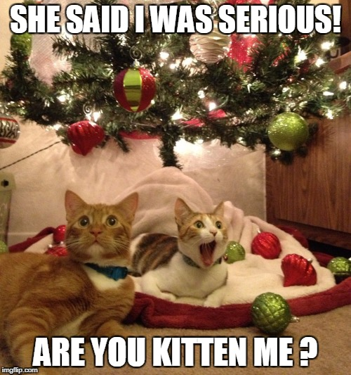 SHE SAID I WAS SERIOUS! ARE YOU KITTEN ME ? | image tagged in christmas cats | made w/ Imgflip meme maker