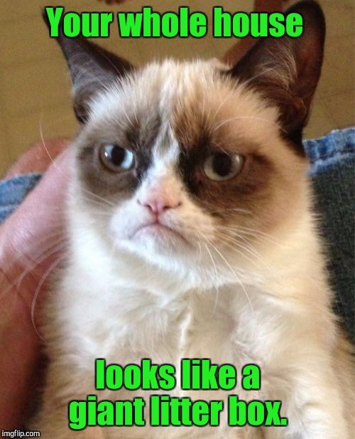 Grumpy Cat Meme | Your whole house looks like a giant litter box. | image tagged in memes,grumpy cat | made w/ Imgflip meme maker