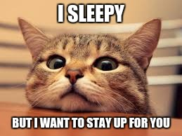 I sleepy | I SLEEPY BUT I WANT TO STAY UP FOR YOU | image tagged in sleepy,cat | made w/ Imgflip meme maker