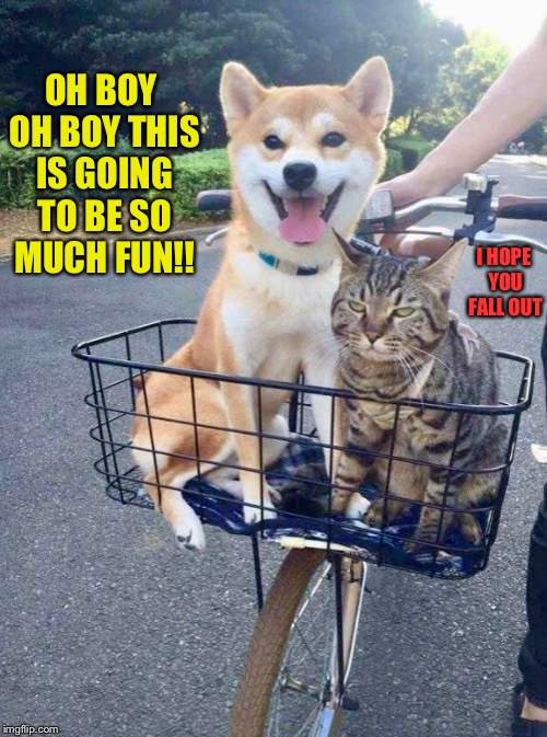 dog personality/cat personality  | OH BOY OH BOY THIS IS GOING TO BE SO MUCH FUN!! I HOPE YOU FALL OUT | image tagged in dog,cat,bike,bicycle,ride | made w/ Imgflip meme maker