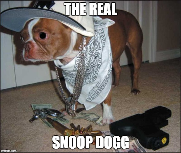 OG!!! | THE REAL SNOOP DOGG | image tagged in funny,memes,gifs,snoop dogg,raydog,funny memes | made w/ Imgflip meme maker