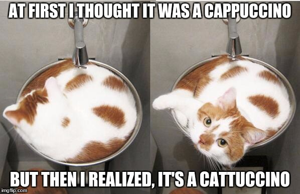 AT FIRST I THOUGHT IT WAS A CAPPUCCINO BUT THEN I REALIZED, IT'S A CATTUCCINO | image tagged in cappuccino | made w/ Imgflip meme maker