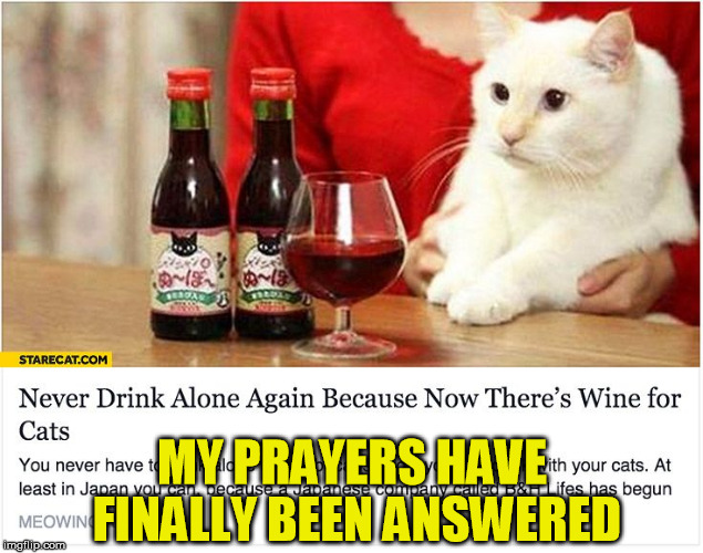 Finally! | MY PRAYERS HAVE FINALLY BEEN ANSWERED | image tagged in cat,wine,drink,alone | made w/ Imgflip meme maker