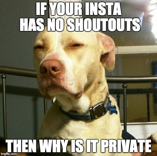 IF YOUR INSTA HAS NO SHOUTOUTS THEN WHY IS IT PRIVATE | image tagged in suspicious dog | made w/ Imgflip meme maker