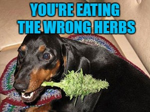 YOU'RE EATING THE WRONG HERBS | made w/ Imgflip meme maker