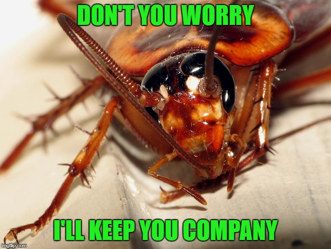 DON'T YOU WORRY I'LL KEEP YOU COMPANY | made w/ Imgflip meme maker
