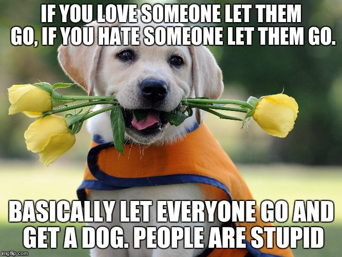 Cute dog | IF YOU LOVE SOMEONE LET THEM GO, IF YOU HATE SOMEONE LET THEM GO. BASICALLY LET EVERYONE GO AND GET A DOG. PEOPLE ARE STUPID | image tagged in cute dog | made w/ Imgflip meme maker