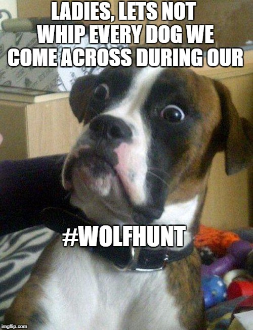 Blankie the Shocked Dog | LADIES, LETS NOT WHIP EVERY DOG WE COME ACROSS DURING OUR #WOLFHUNT | image tagged in blankie the shocked dog | made w/ Imgflip meme maker