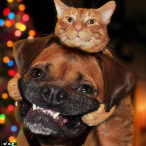 dogs an cats | image tagged in dogs an cats | made w/ Imgflip meme maker