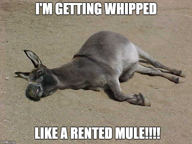 I'M GETTING WHIPPED LIKE A RENTED MULE!!!! | image tagged in current mood | made w/ Imgflip meme maker