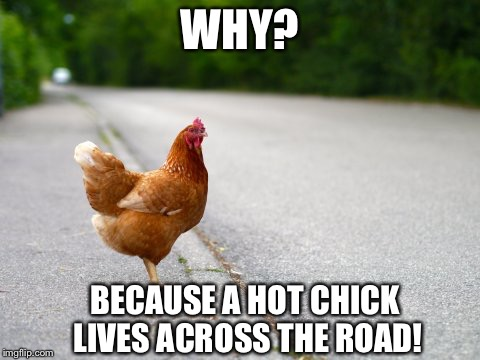 I'm on my way! | WHY? BECAUSE A HOT CHICK LIVES ACROSS THE ROAD! | image tagged in meme,chicken,joke | made w/ Imgflip meme maker