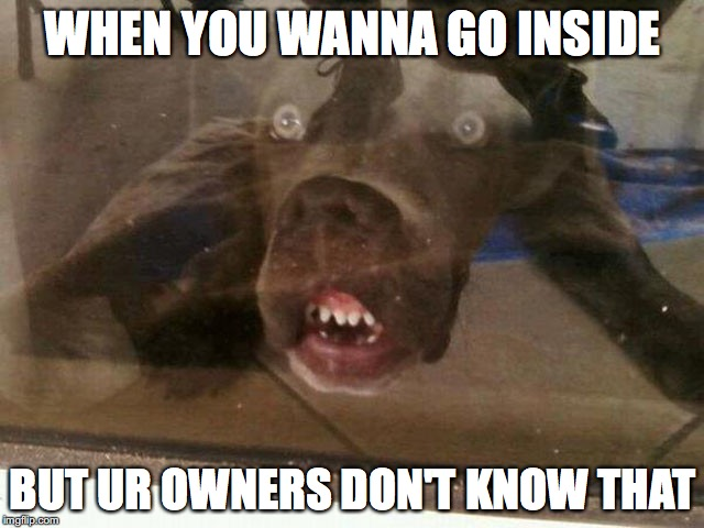 When ya wanna go inside | WHEN YOU WANNA GO INSIDE BUT UR OWNERS DON'T KNOW THAT | image tagged in funny dogs,what the heck | made w/ Imgflip meme maker