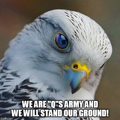 "Q Army | WE ARE ""Q""S ARMY AND WE WILL STAND OUR GROUND! 