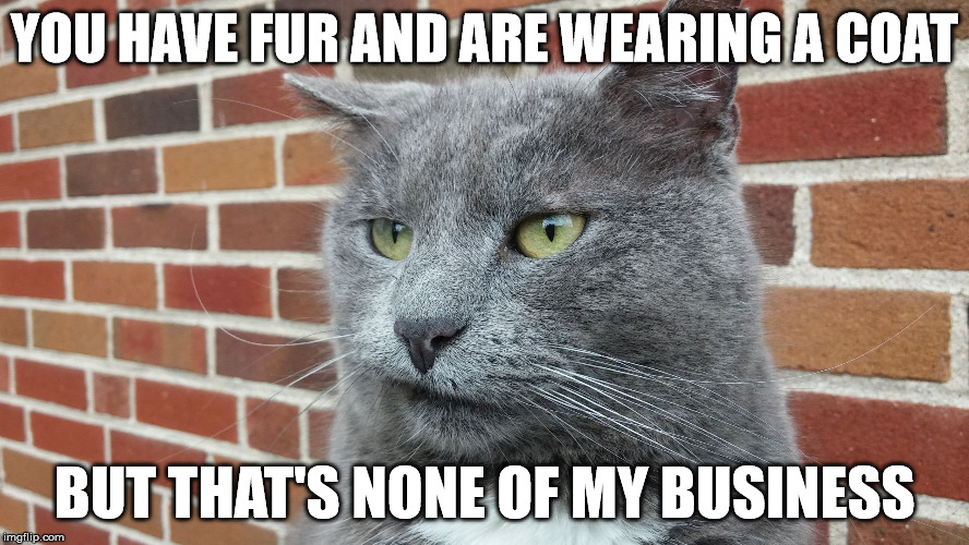 Evil Cat | YOU HAVE FUR AND ARE WEARING A COAT BUT THAT'S NONE OF MY BUSINESS | image tagged in evil cat | made w/ Imgflip meme maker