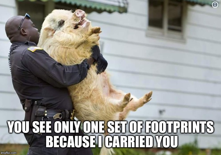 YOU SEE ONLY ONE SET OF FOOTPRINTS BECAUSE I CARRIED YOU | image tagged in boar-ing | made w/ Imgflip meme maker