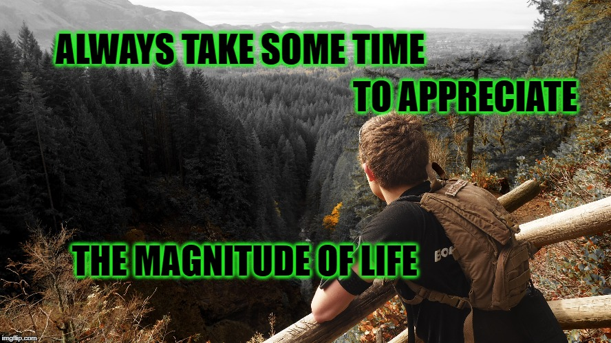 Magnitude | ALWAYS TAKE SOME TIME TO APPRECIATE THE MAGNITUDE OF LIFE | image tagged in life,nature,focus,inspirational quote,motivation,meditation | made w/ Imgflip meme maker