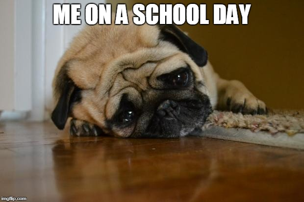 sad dog | ME ON A SCHOOL DAY | image tagged in sad dog | made w/ Imgflip meme maker