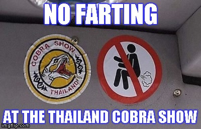Cobra Show | NO FARTING AT THE THAILAND COBRA SHOW | image tagged in memes,farting,thailand cobra show,thailand,cobra,show | made w/ Imgflip meme maker