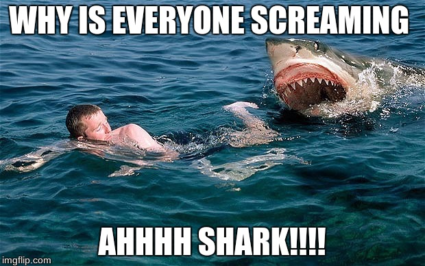 Swimming with sharks | WHY IS EVERYONE SCREAMING AHHHH SHARK!!!! | image tagged in swimming with sharks | made w/ Imgflip meme maker