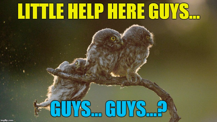 Their eyes are obviously better than their ears... :) | LITTLE HELP HERE GUYS... GUYS... GUYS...? | image tagged in memes,owls,animals,fail,nature,birds | made w/ Imgflip meme maker