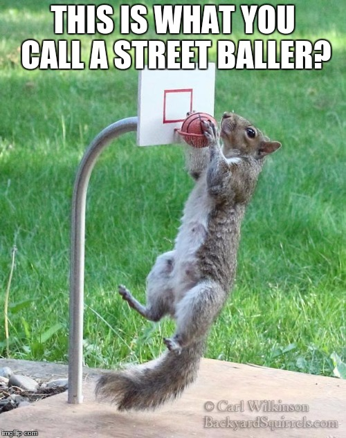 Squirrel basketball | THIS IS WHAT YOU CALL A STREET BALLER? | image tagged in squirrel basketball | made w/ Imgflip meme maker